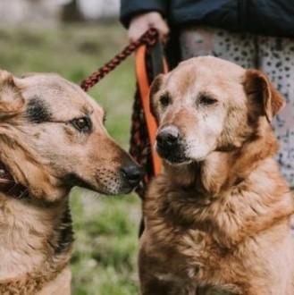 JULKA i LUIS - cudowne  sponiewierane życiem psiaki błagają o wspólny dom