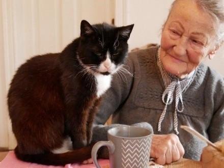 Roczna Mamba  cudna kotka szuka domu!   Koty pospolite cała Polska