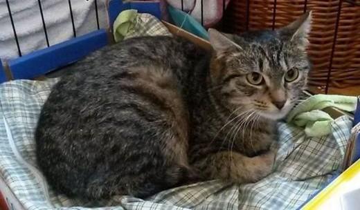 Młodziutka śliczna koteczka Phibi szuka kochającego domu!    wielkopolskie Poznań
