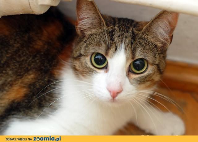 Kotka Lilou szuka domu! Agapeanimali