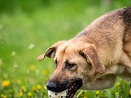 Orion - niezwylke atrakcyjny pies szuka stałego zameldowania;-)   lubelskie Lublin