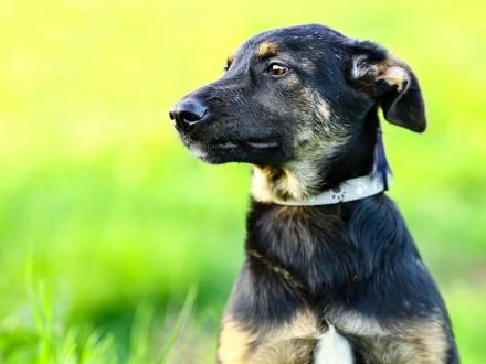 Pulpet  4 miesięczny psiak szuka kochającego domu!