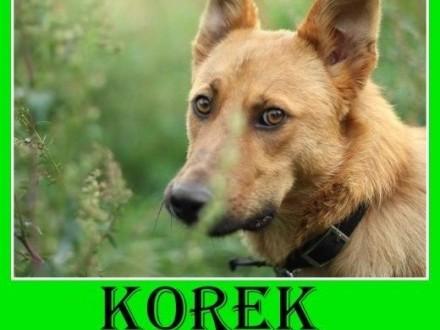 20kg młody 12 mieswesoły łagodny towarzyski pies KOREKAdopcja   dolnośląskie Wrocław