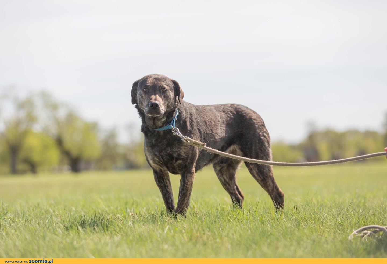 Gabor, ciekawy świata, grzeczny psiak szuka domu!