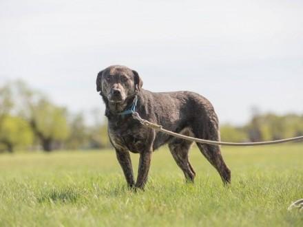 Gabor  ciekawy świata  grzeczny psiak szuka domu!