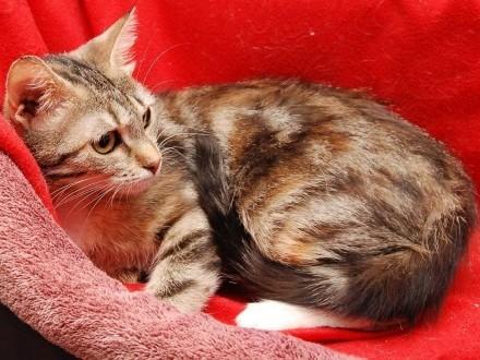 Rosie młodziutka kochana koteczka bez stópki Czy ktoś ją pokocha?