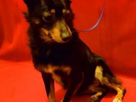 LALUŚ - mały  9 kg cudowny psiaczek szuka domu   mazowieckie Warszawa