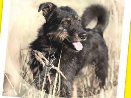 Terier mix  aktywny przyjacielski łagodny psiak WESOŁY_Adopcja