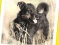 Terier mix, aktywny,przyjacielski,łagodny psiak WESOŁY_Adopcja