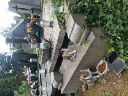 Piękne kociaczki    mazowieckie Warszawa