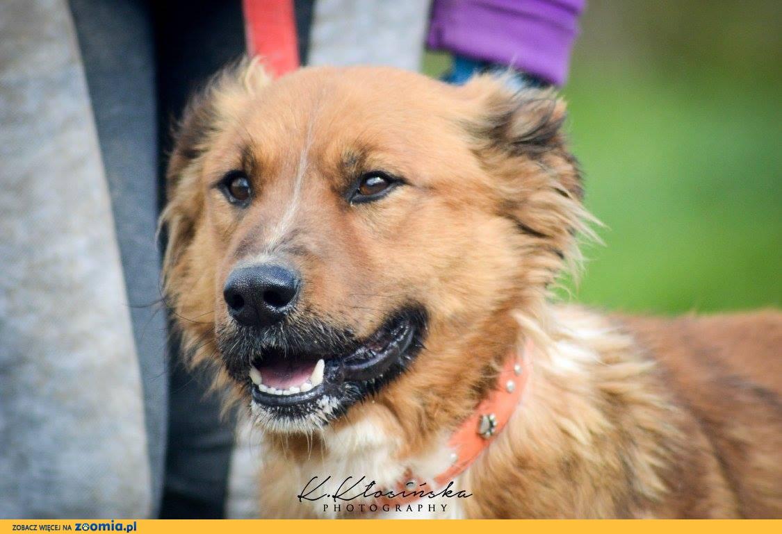 Przyjazny Ziółek, wspaniały pies do pokochania!