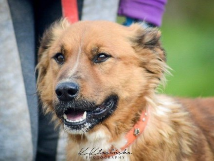 Przyjazny Ziółek  wspaniały pies do pokochania!