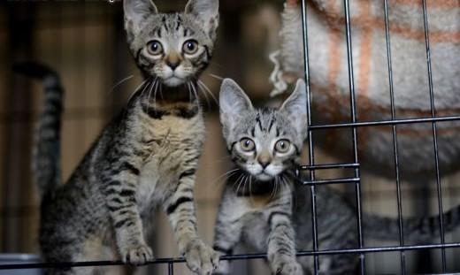 3-miesięczne kociczki szukają domku   śląskie Gliwice