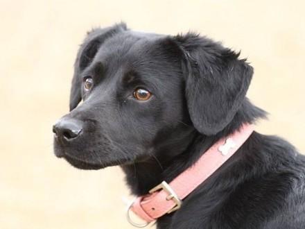 Lorka-psi dzieciak w schronisku