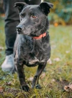 KUKI - cudowny  wpatrzony w człowieka psiak szuka domu   łódzkie Łódź