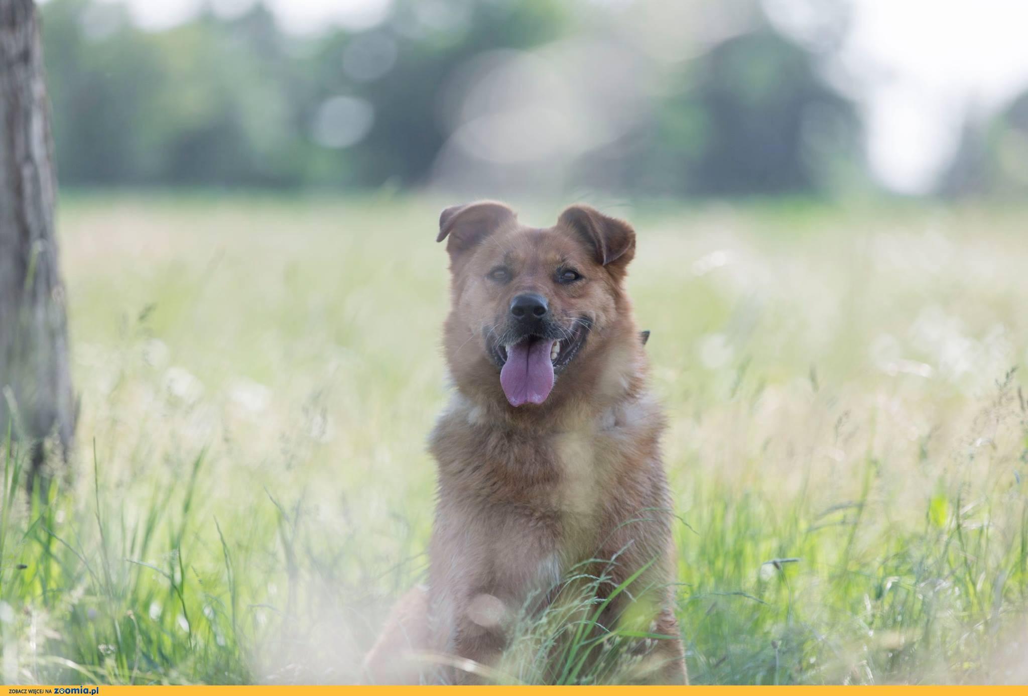Rudy, wspaniały pies, niekonfliktowy, przyjazny - do pokochania od zaraz!