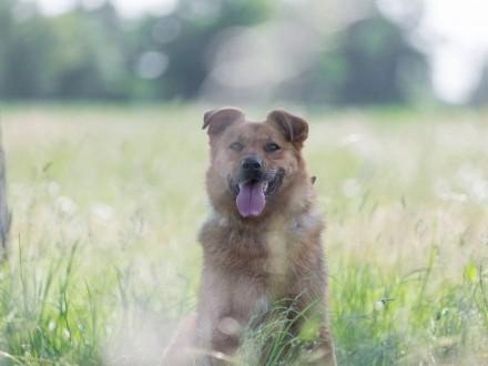 Rudy  wspaniały pies  niekonfliktowy  przyjazny - do pokochania od zaraz!