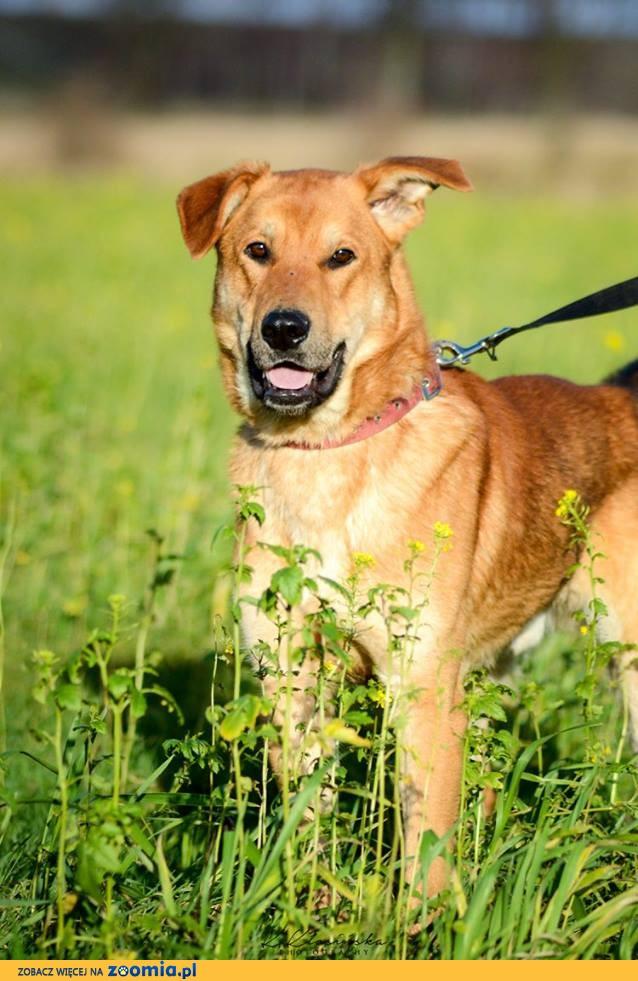 Wesoły młodziak Tenor, przyjazna psina szuka aktywnej rodziny!