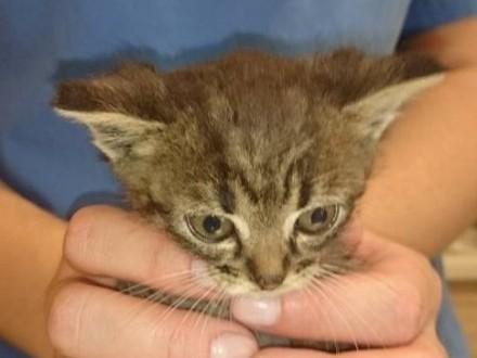 Malutki kociak szuka domu