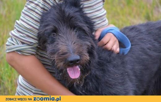 Burgund - wyjątkowy pies !,  dolnośląskie Wrocław