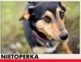 'NIETOPERKA,mała,młoda,łagodna,rodzinna suczka jamnik mix.ADOPCJA,  łódzkie Łódź