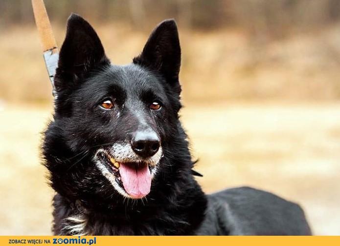Elvis - imponujący pies! :)
