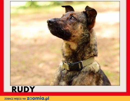 Uratowany,przyjazny,wesoły,czujny piesek RUDY.Adopcja,  małopolskie Kraków