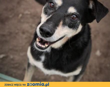 Figlarka - nieśmiała psina od szczenięcia w schronisku