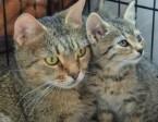 Wyrzucona koteczka z dwoma maluchami,  mazowieckie Warszawa
