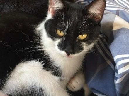Obywatel z Fundacji Miasto Kotów - ten wspaniały kot szuka domu