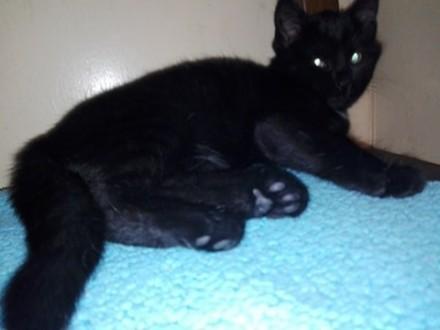 Inez - filigranowa koteczka szuka domu