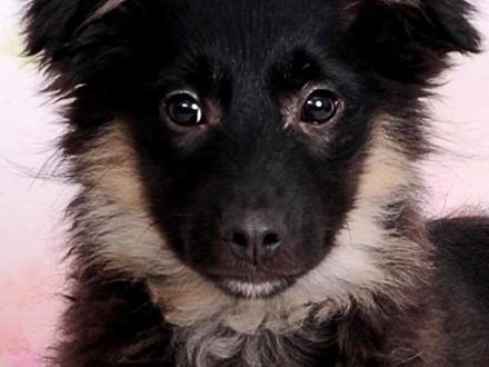 Oreo, 4 miesięczny SZCZENIAK szuka kochającego domu!