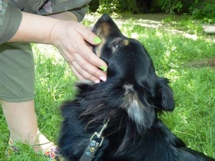 Nakolankowy Koper  przyjazny psiaczek do pokochania!