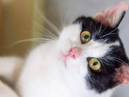 Frida - śłiczna czarno-biała koteczka szuka domu