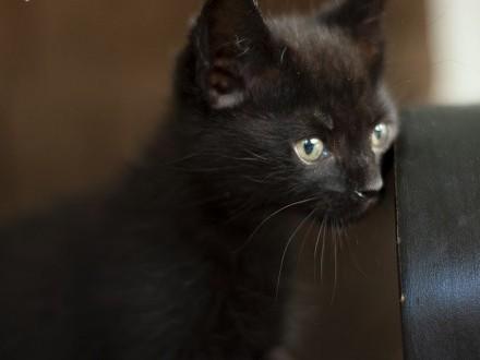Lizzie z Fundacji Miasto Kotów   łódzkie Piotrków Trybunalski