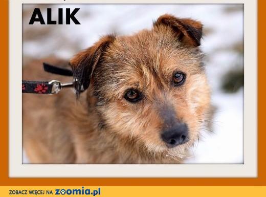 ALIK-mały terier mix,łagodny,tulaśny,wesoły piesek.ADOPCJA,  mazowieckie Warszawa
