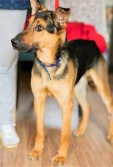 IMBIR - młody  energiczny  świetny psiak szuka domu   mazowieckie Warszawa