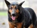 TAGNO dobry, uległy młody pies szuka domu,  małopolskie Kraków
