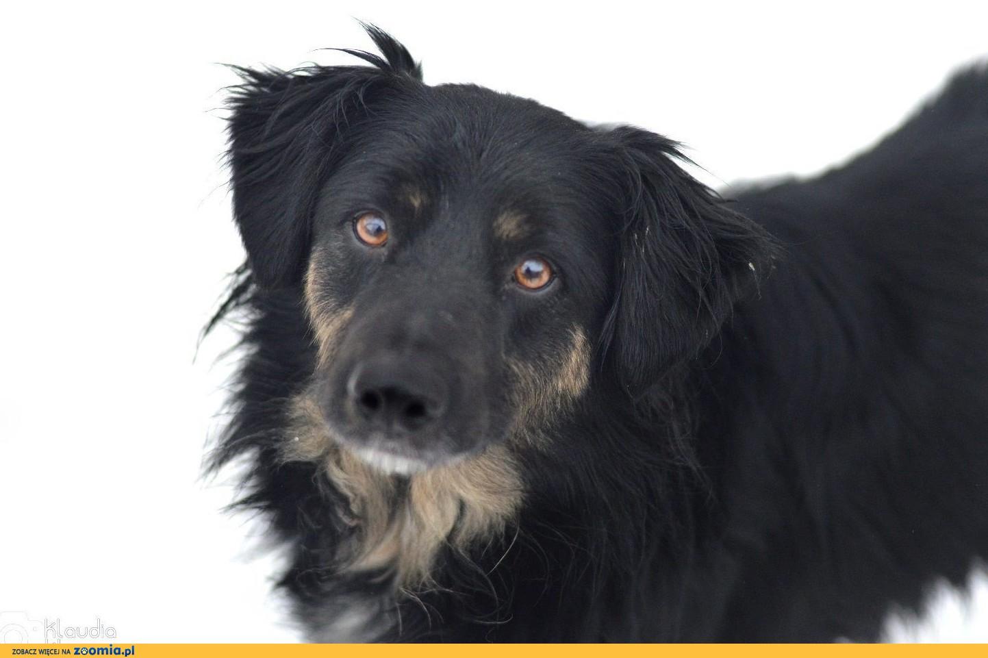 Zygi, uległy, opanowany i grzeczny psiak szuka domu!