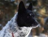 Spajk - śliczny pies o oryginalnym umaszczeniu :)