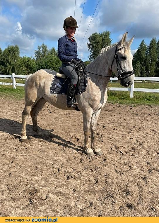 Szukam konia do dzierżawy/współdzierżawy
