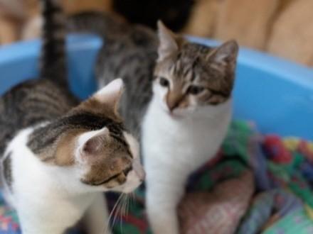 Cudne 5-miesięczne kocie rodzeństwo czeka na nowy dom!