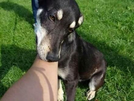 Psi anioł NELA bardzo wdzięczna  młodziutka sunia szuka domu   łódzkie Łódź