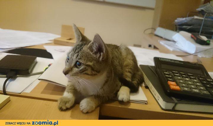 Koteczka Fryndzelka szuka domu