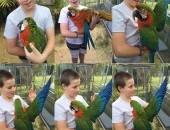 Afrykańska papuga szara Samiec i samica
