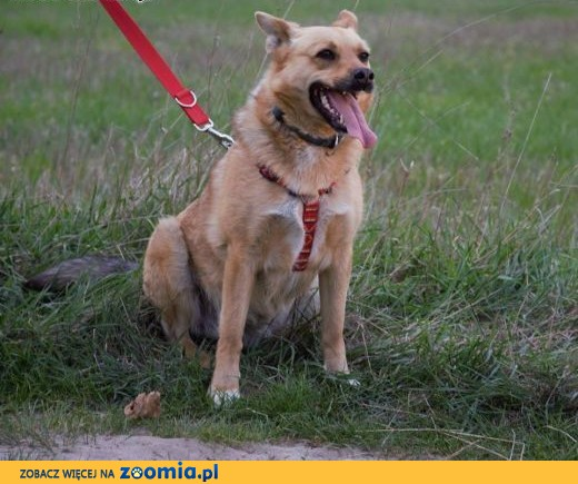 Astra bardzo poleca się do adopcji,  mazowieckie Warszawa