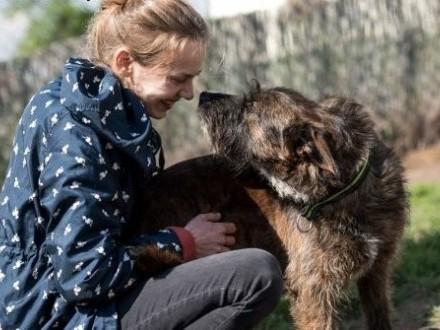 Delikatna i kochająca Londi szuka domu,  mazowieckie Warszawa