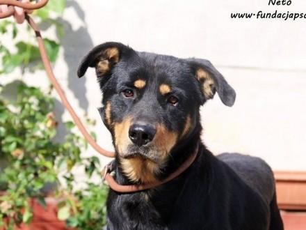 Neto - sympatyczny i przyjacielski pies