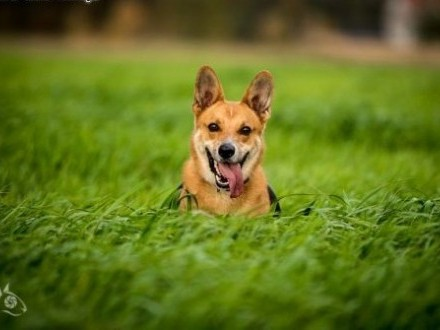Wspaniały pies TOFFIK esencja psiej miłości :)   małopolskie Kraków
