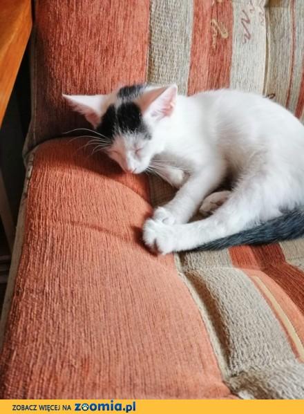 Kociak Groszek szuka domu